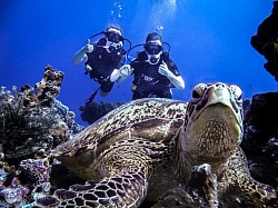 PADI Open Water Opportunities...